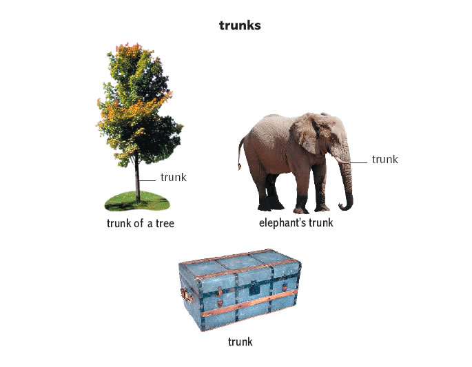 twigs dictionary