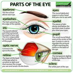 parts of the eye and their functions pdf